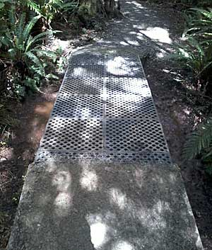 Seaward Bush walkway