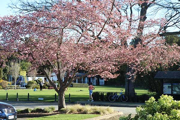 Anderson Park - Spring 2018