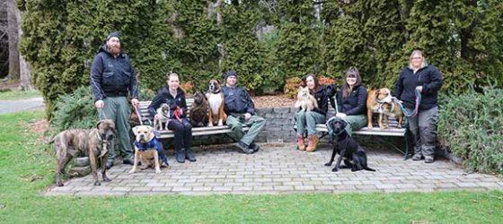 Animal Control team in Queens Park